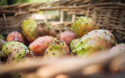 L'huile de pépins de figue de Barbarie